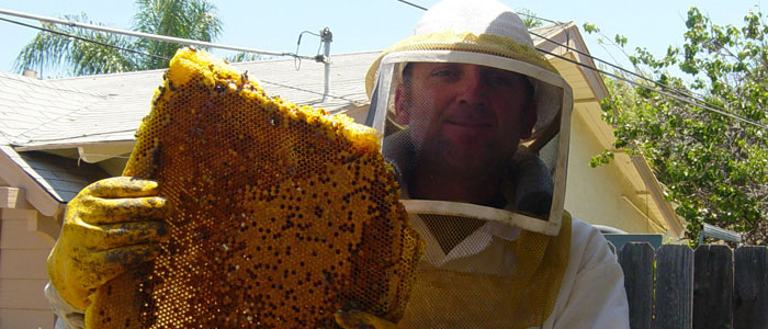 Murrieta Bee Removal Guys Tech Michael