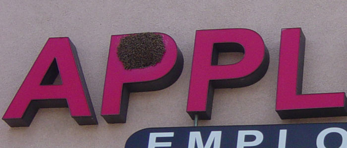 Bee Removal For Property Managers