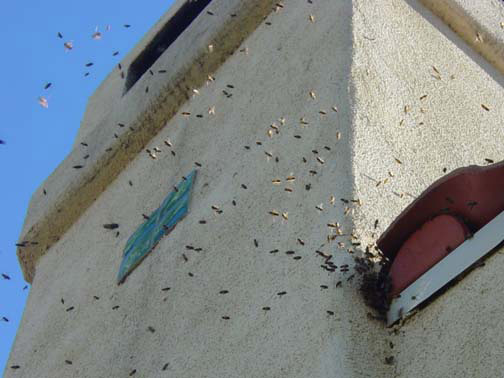 Bee Removal Murrieta This is 